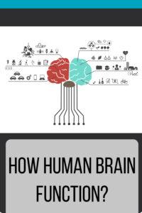How Human Brain Function Pin